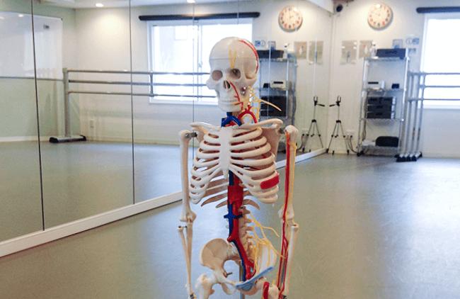 人体模型(90㎝)